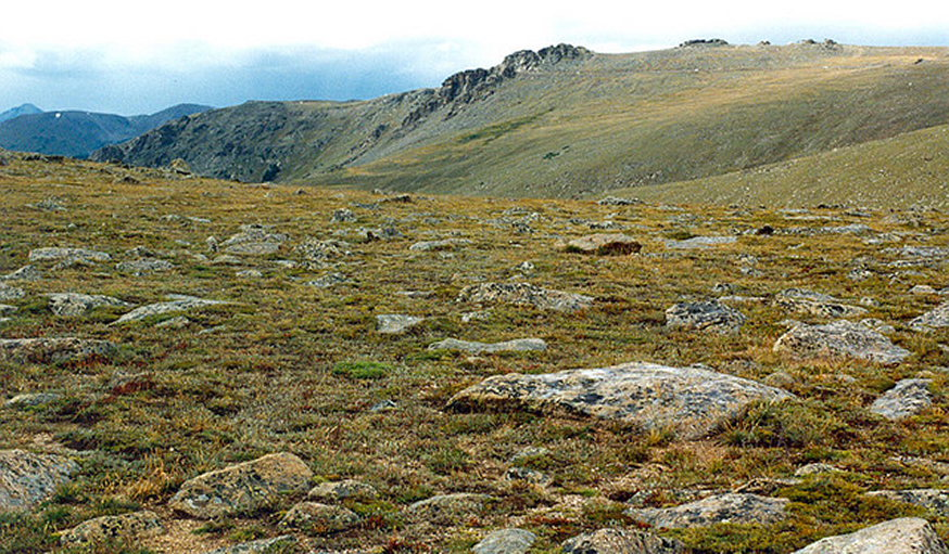 Rocky Mountain NP: tundra in rocky mt NP  - © flickr user roger4336