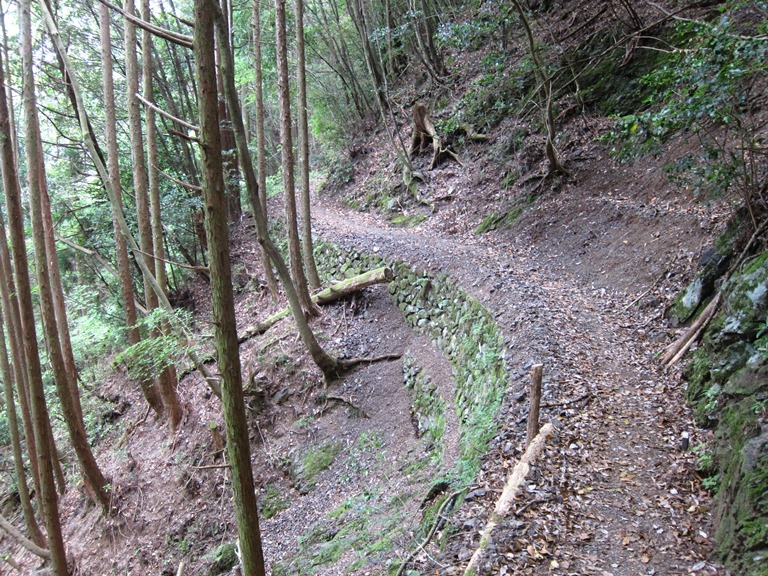 Nakahechi Trail : Old, terraced path  - © William Mackesy