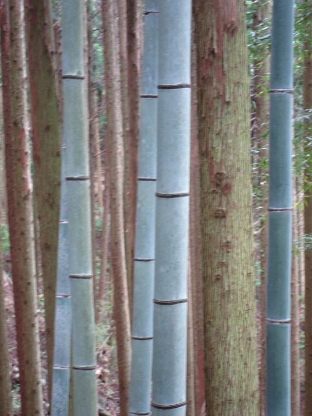 Japan Kansai: Kii Peninsula, Nakahechi Trail , Nature as art, Walkopedia