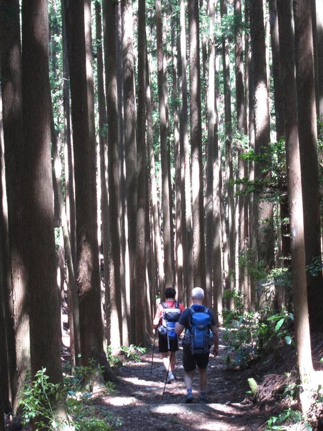 Japan Kansai: Kii Peninsula, Nakahechi Trail , Nature as art, gothic cathedral , Walkopedia