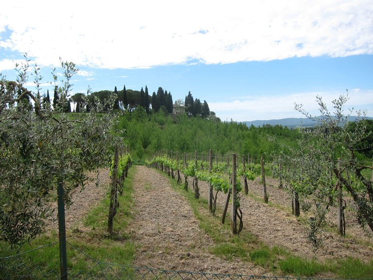 Via Francigena; San Gimignano to Montalcino: well-loved land - © William Mackesy