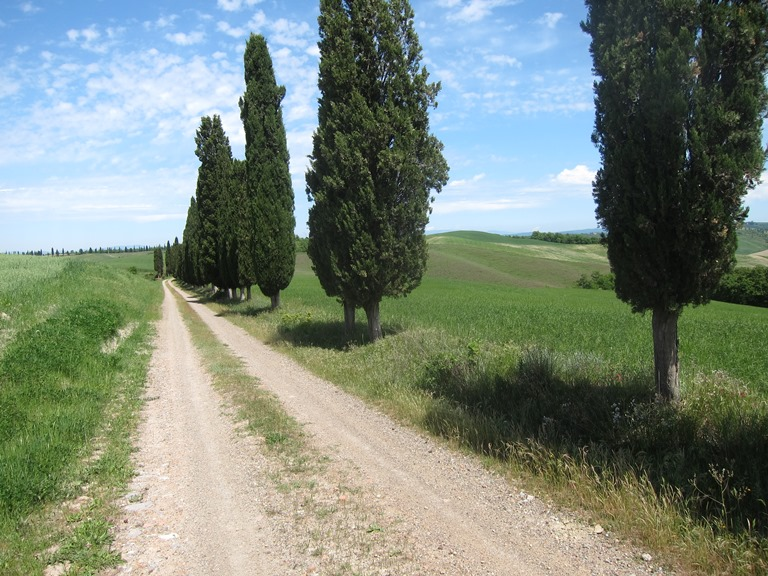 Via Francigena; San Gimignano to Montalcino: Classic - © William Mackesy