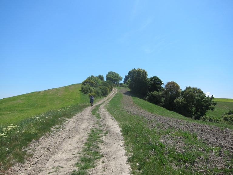 Via Francigena; San Gimignano to Montalcino: Up the ridge  - © William Mackesy