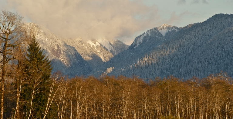 Quinault River Valley - ©  wild trees flickr user