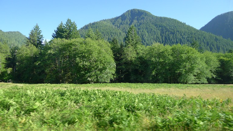 Quinault River Valley - © Patsy Wooters flickr user