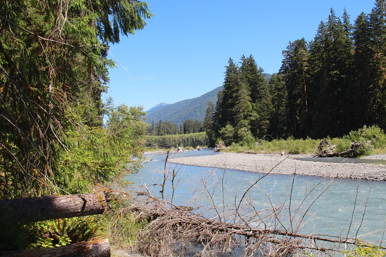 Hoh River  - © daveynin flickr user