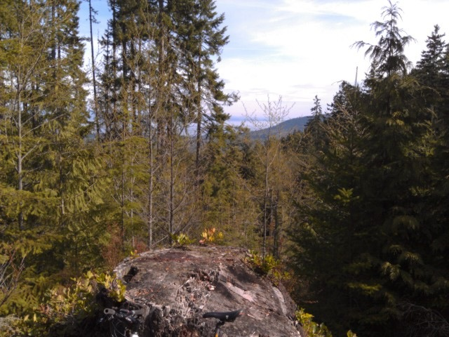 USA North-west/Olympic NP, Olympic Discovery Trail, Bruce's Stump , Walkopedia