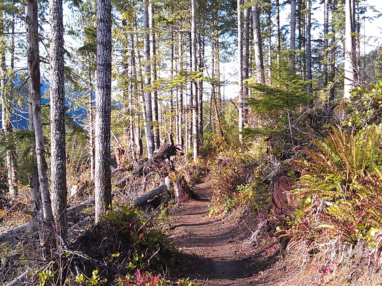 USA North-west/Olympic NP, Olympic Discovery Trail, Clearcuts mean sun, Walkopedia
