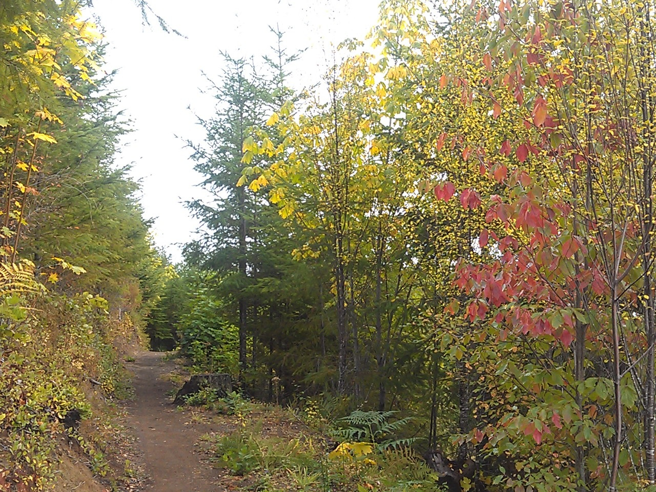 Olympic Discovery Trail: Fall on AR  - © oatrun flickr user