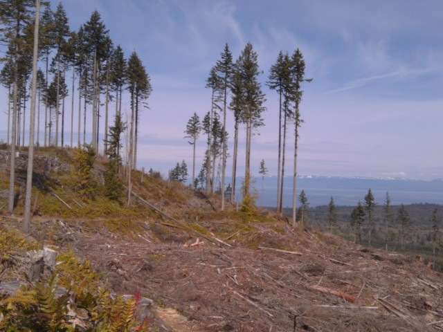 Olympic Discovery Trail: clearcut view  - © oatrun flickr user