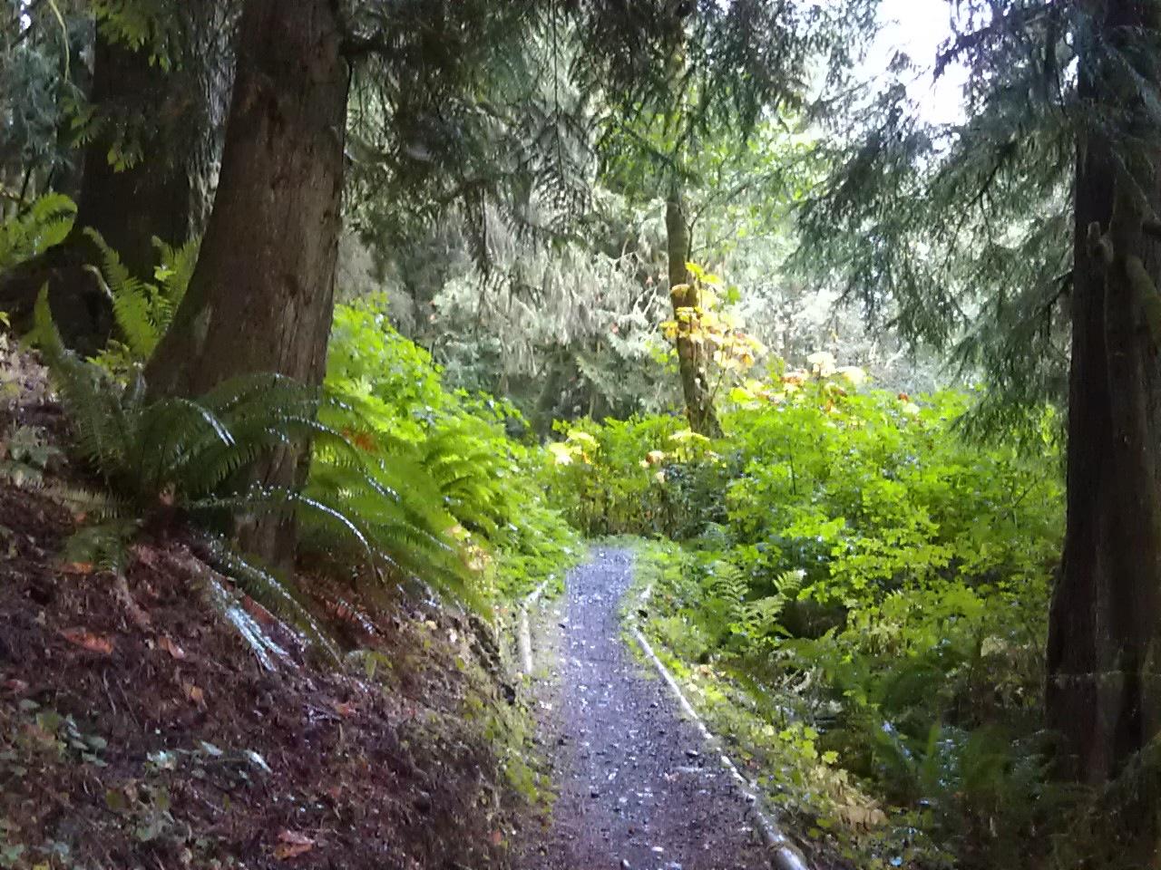 USA North-west/Olympic NP, Olympic Discovery Trail, near GraulRamapo, Walkopedia