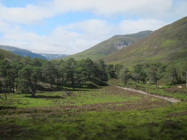 United Kingdom Scotland Cairngorms, Glen Lui, Magical upper Glen Lui, Walkopedia