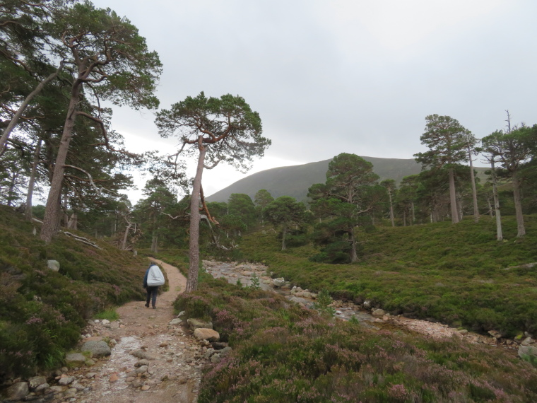 United Kingdom Scotland Cairngorms, Glen Lui, Upper Glen Lui, Walkopedia