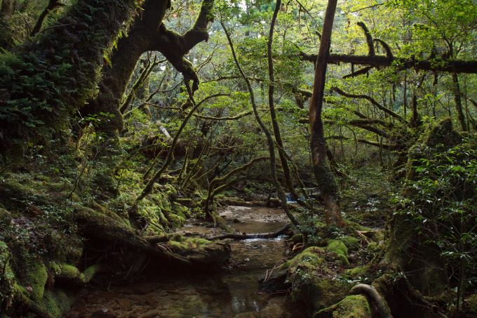 Yakushima traverse - © Flickr user: Indrik Myneur