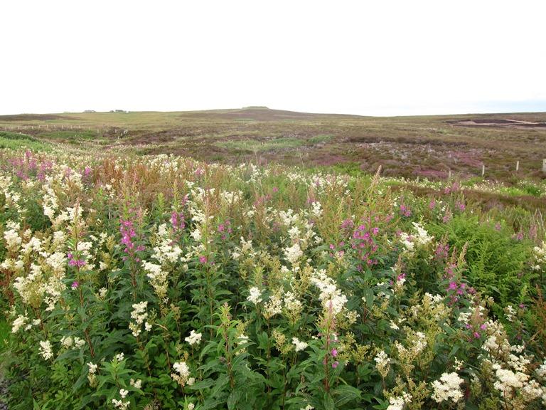 United Kingdom Scotland Orkney Islands, Orkney Islands, Hobbister reserve, Walkopedia
