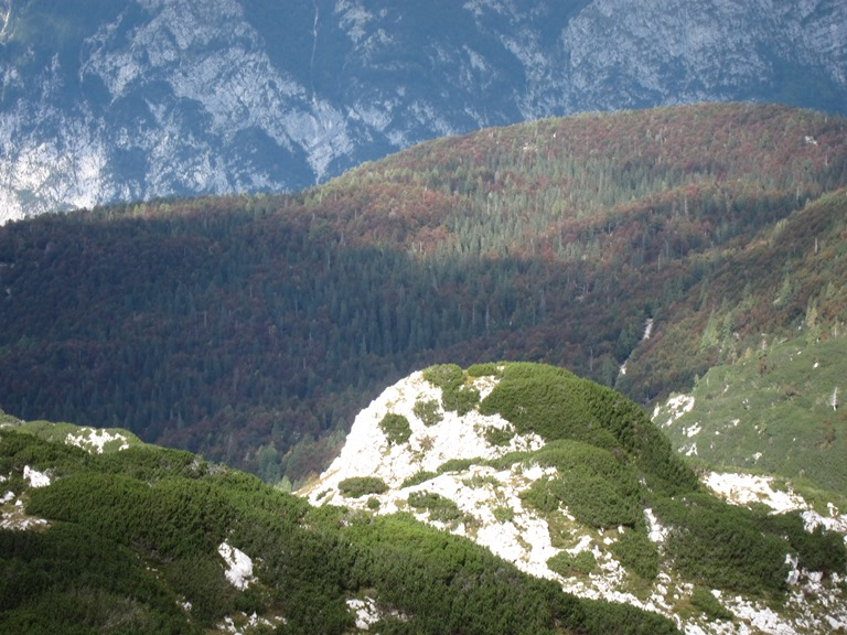Virgin forest above Lake Bohinj - © William Mackesy