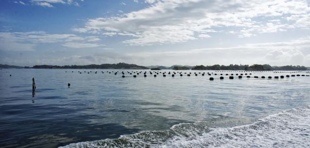 Matsushima Bay oyster farming - © Walk Japan