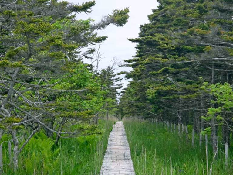 Board walk - © Walk Japan