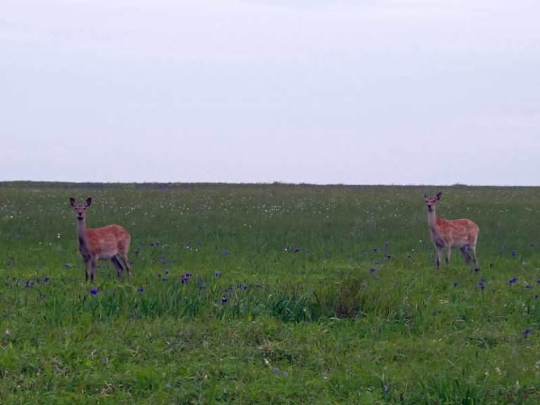 Deer - © Walk Japan