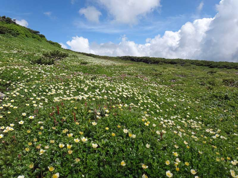 Hike_alpine_flowers_Daisetsuzan  - © Walk Japan