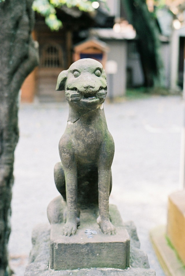 Ontake-san: A Guardian Dog of Ontake Shrine  - © Flickr User - Jun Takeuchi