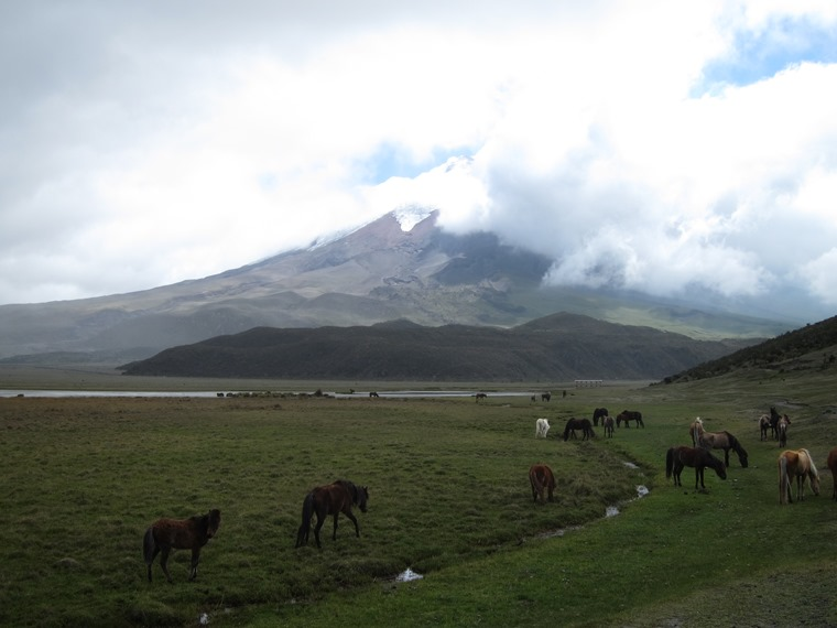 Cotopaxi Circuit/Loop: Cotopaxi over Limpiopungo herds - © William Mackesy