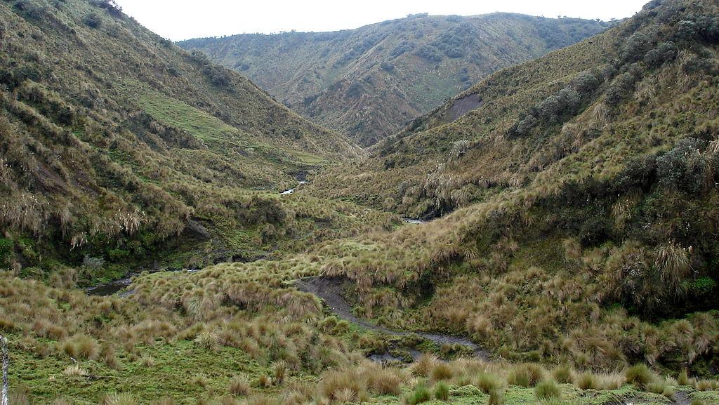 Ecuador Southern Andes: Sangay NP, Volcan Sangay, Paramo in Sangay , Walkopedia