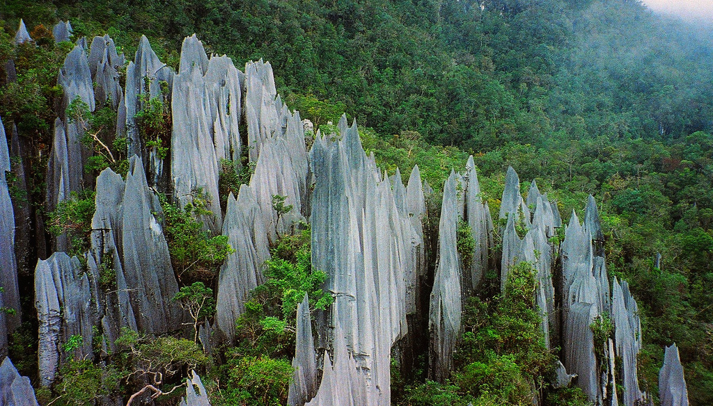 Pinnacles at Mulu, Gunung Mulu National Park, Borneo - ©  flickr user- Paul White