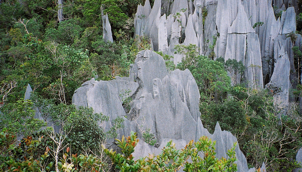 Pinnacles at Mulu, Gunung Mulu National Park, Borneo  - © flickr user- Paul White 2
