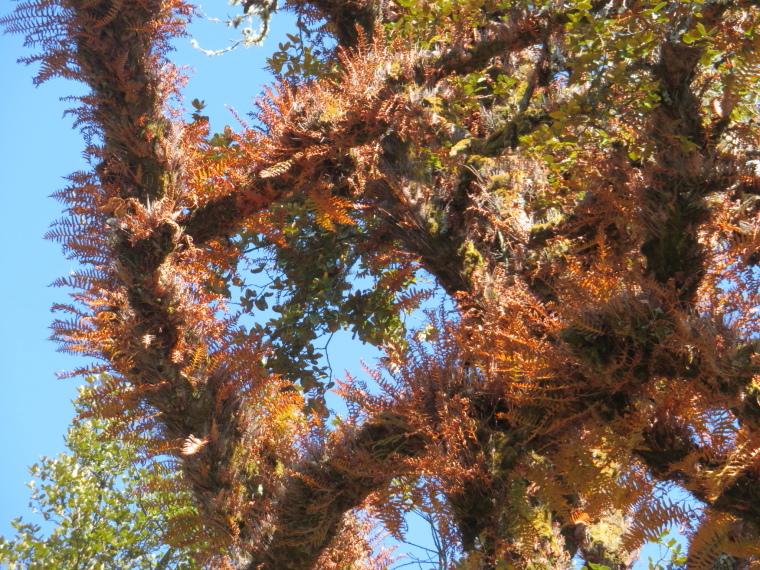 India NW: Uttarakhand, Garwhal, Kumaon Himalaya ,  Autumnal epiphytes, Walkopedia