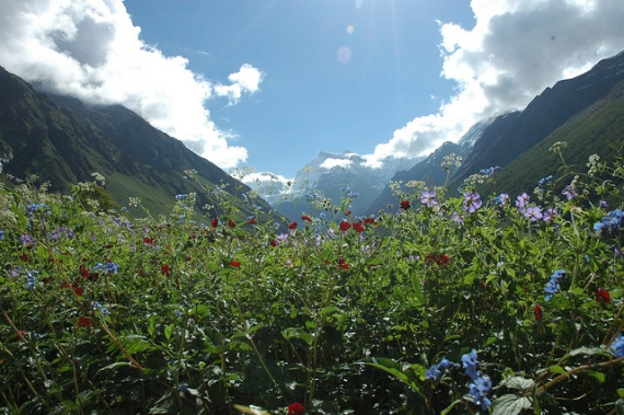 India NW: Uttarakhand, Garwhal, Kumaon Himalaya , Small Valley of flowers, Walkopedia