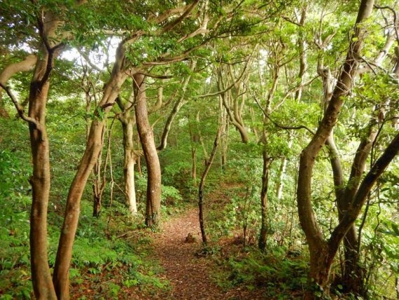 Izu Peninsula: Izu Forest - © Walk Japan
