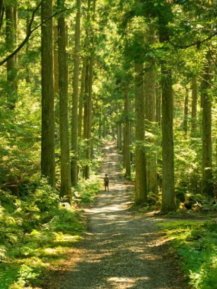Izu Peninsula: Izu Odoriko Trail - © Walk Japan