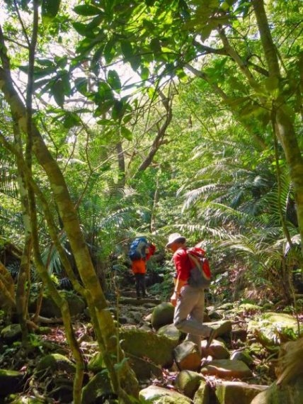 Okinawa Iriomoto Jungle - © Walk Japan