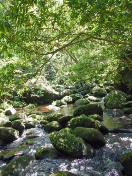 Yaeyama/ Iriomoto: Okinawa Jungle - © Walk Japan