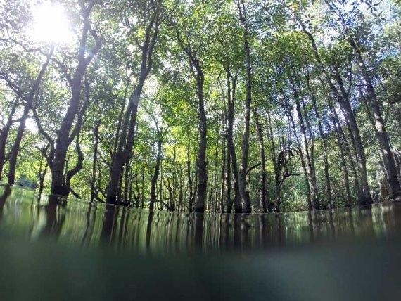 Okinawa mangrove water level - © Walk Japan