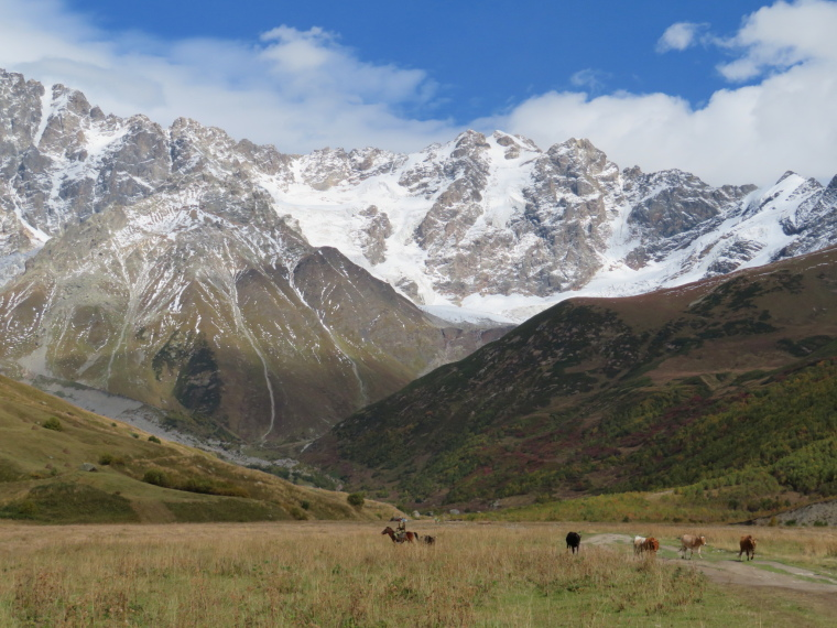 Greater Caucasus Mountains: Herdsman, upper Engeri valley