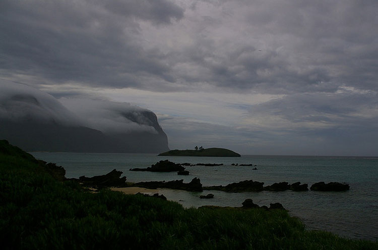 Lord Howe Island Cloud Forest, From Flickr user Percita