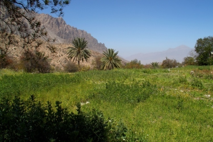 Oman Western Hajar Mts: Jebel Akhdar, Upper Wadi Mistall, Wukan Agriculture, Walkopedia