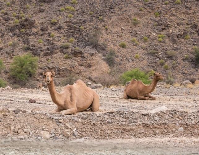 Oman Western Hajar Mts: Jebel Akhdar, Upper Wadi Mistall, Wukan , Walkopedia