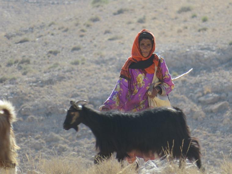 Across the Selma Pateau (E35): Goatherdess - © William Mackesy