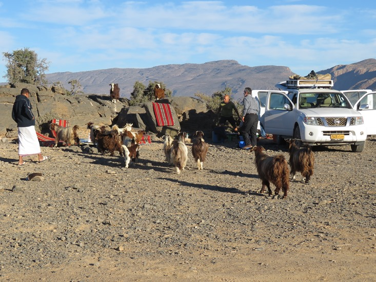 campsite near Wadi Nakhur rim, receiving goat visit - © William Mackesy
