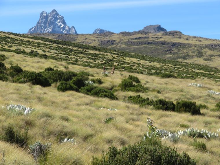 Mount Kenya: Sirimon early day 2 - © William Mackesy