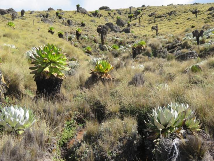 Mount Kenya: © William Mackesy