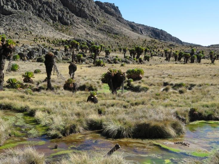 Mount Kenya: Chogoria, Temple Flats - © William Mackesy