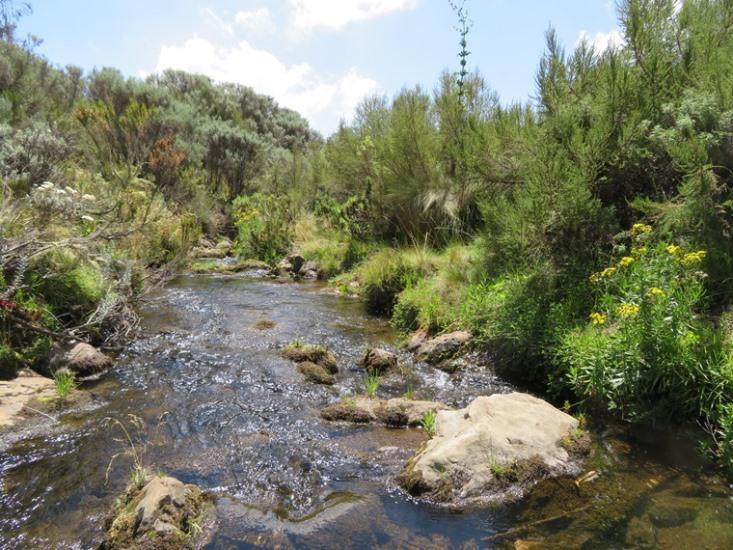 Mount Kenya: Stream at Nithi camp - © William Mackesy