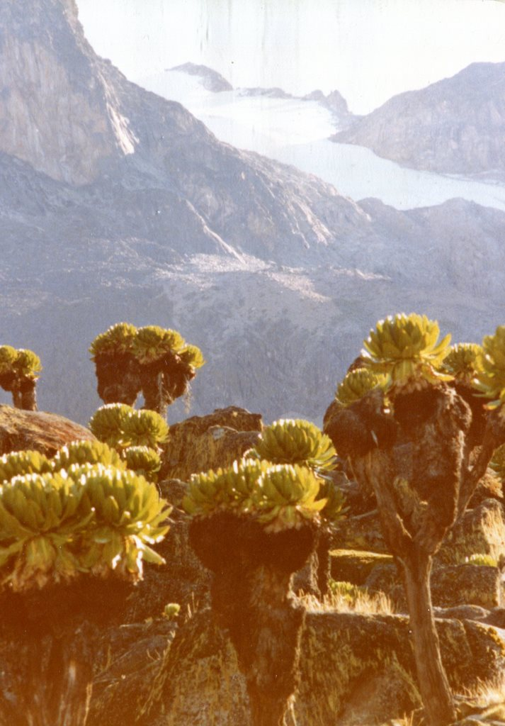 Mount Kenya: Point Lenana from Klarwills Hut with Giant Groundsel Mt Kenya - © Dick Everard