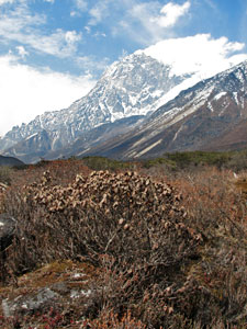 Glacial juniper bushes - © David Briese, www.gang-gang.net/nomad
