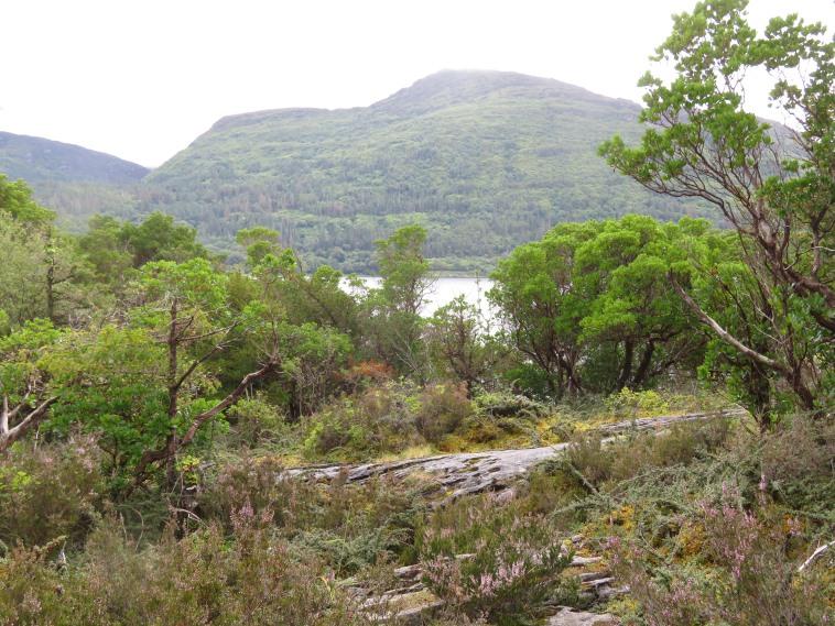 Killarney Lakes: Torc mountain from Muckross Lake - © William Mackesy