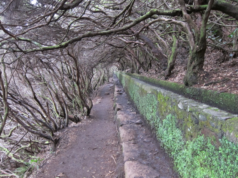 Portugal Madeira, Madeira , Tree tunnel, 25 fontes, Walkopedia